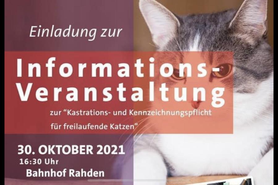 Information Tierschutz Katzen